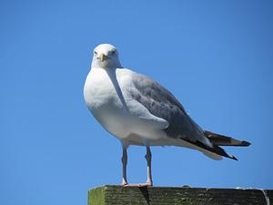 Grey gray plumage