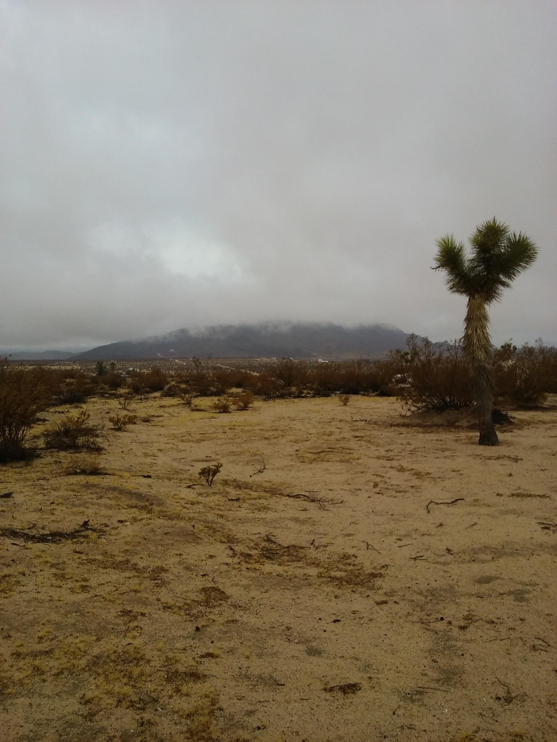 Desert california