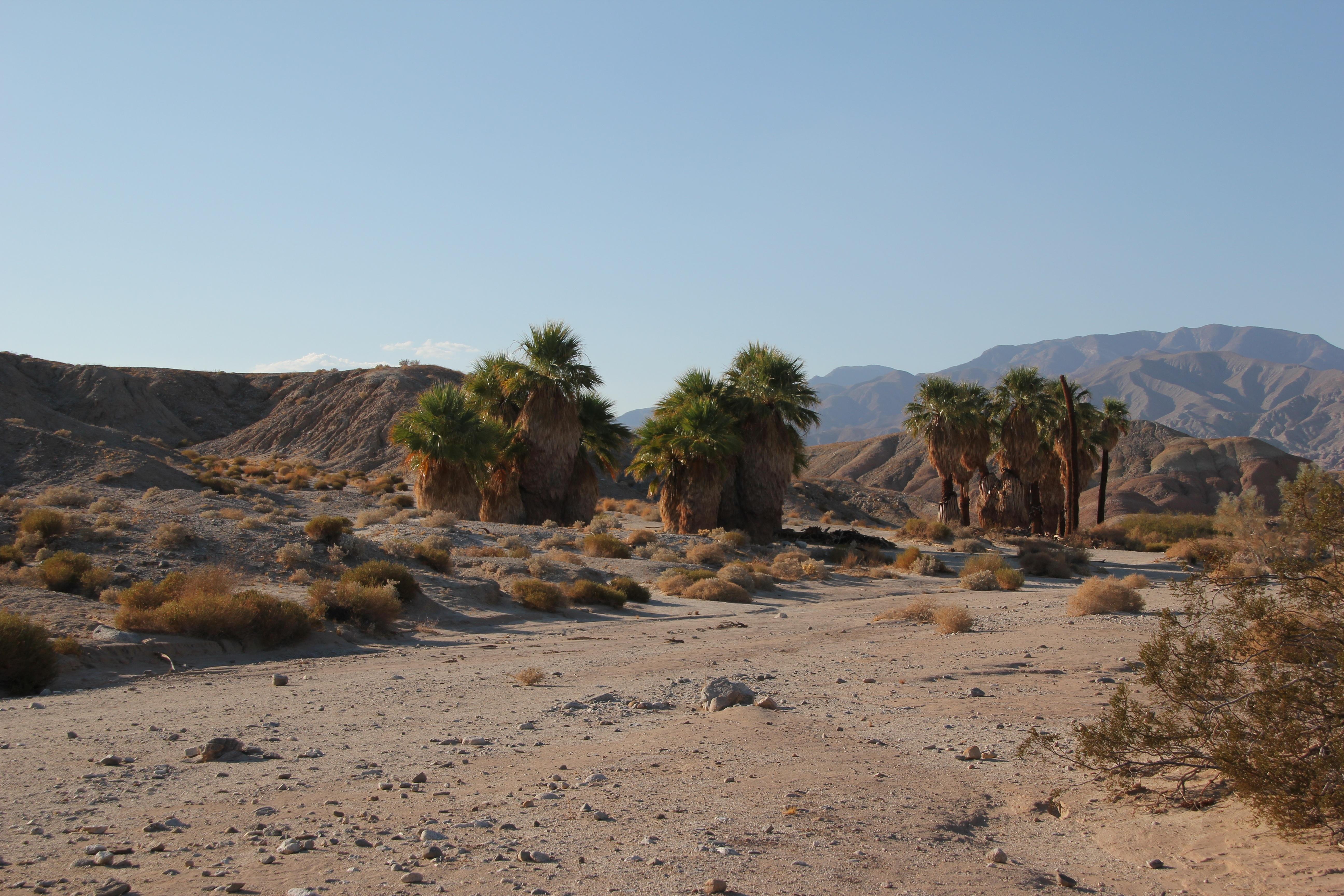 Anza borrego desert california