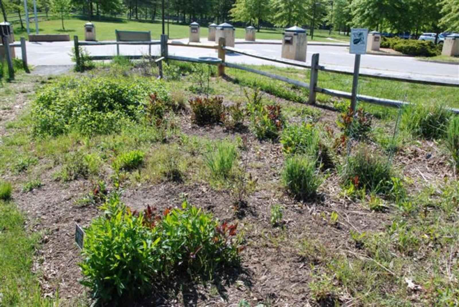 Butterfly garden investigation