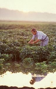 Array investigator soybean