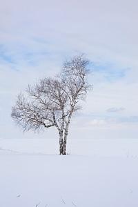 One landscape alone