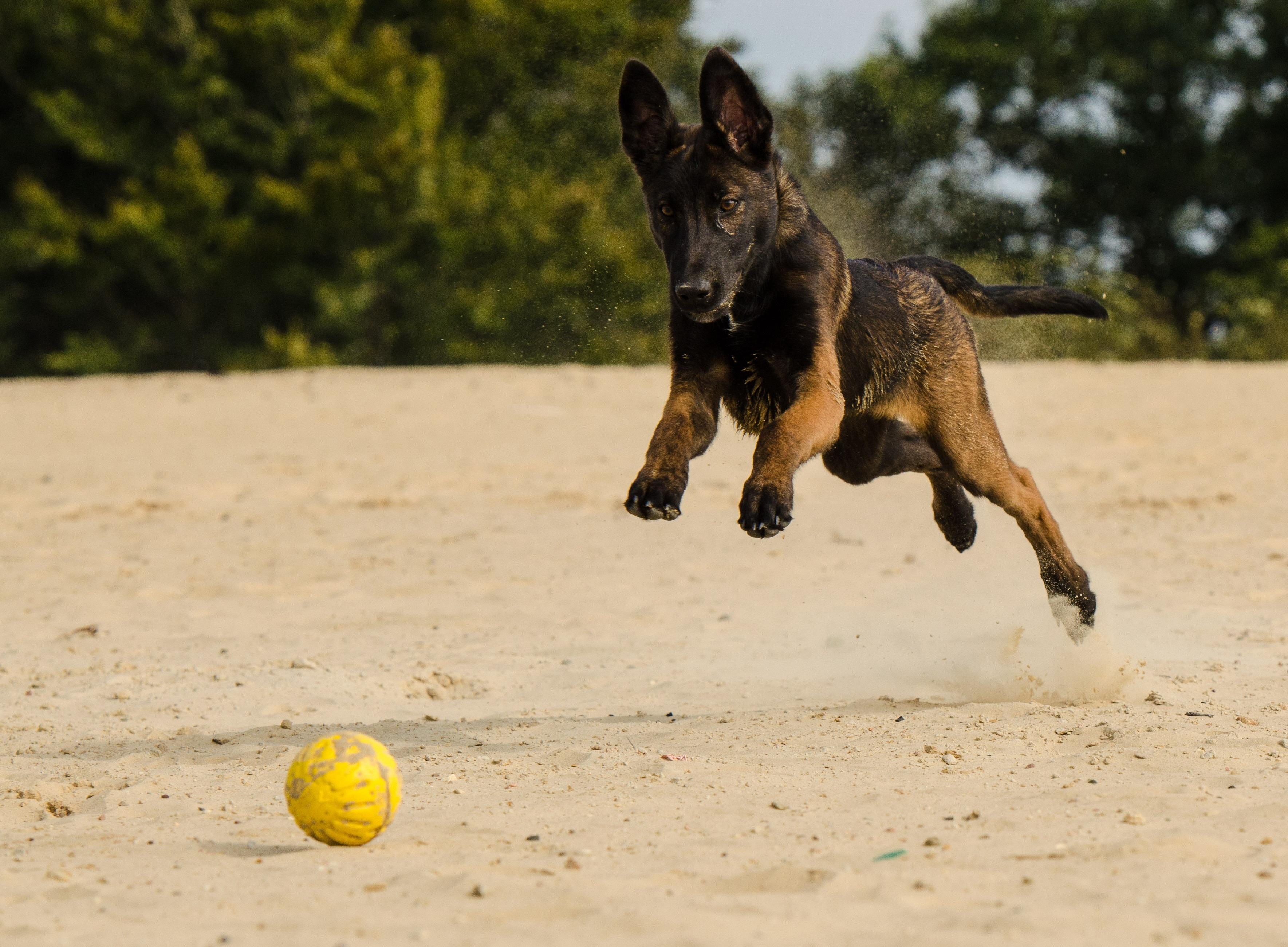 Ball motion recording running dog