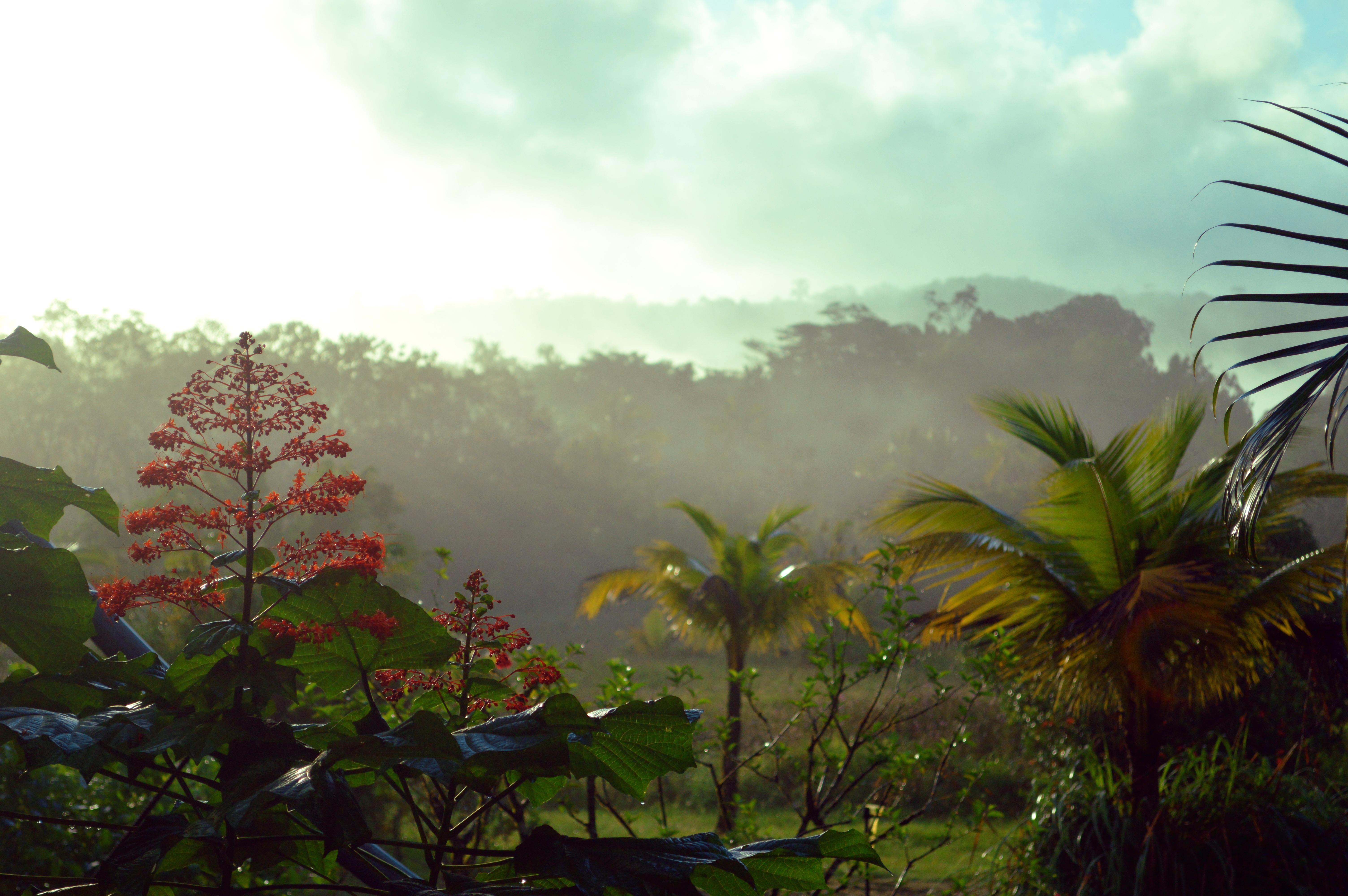 Guiana guyana tropical