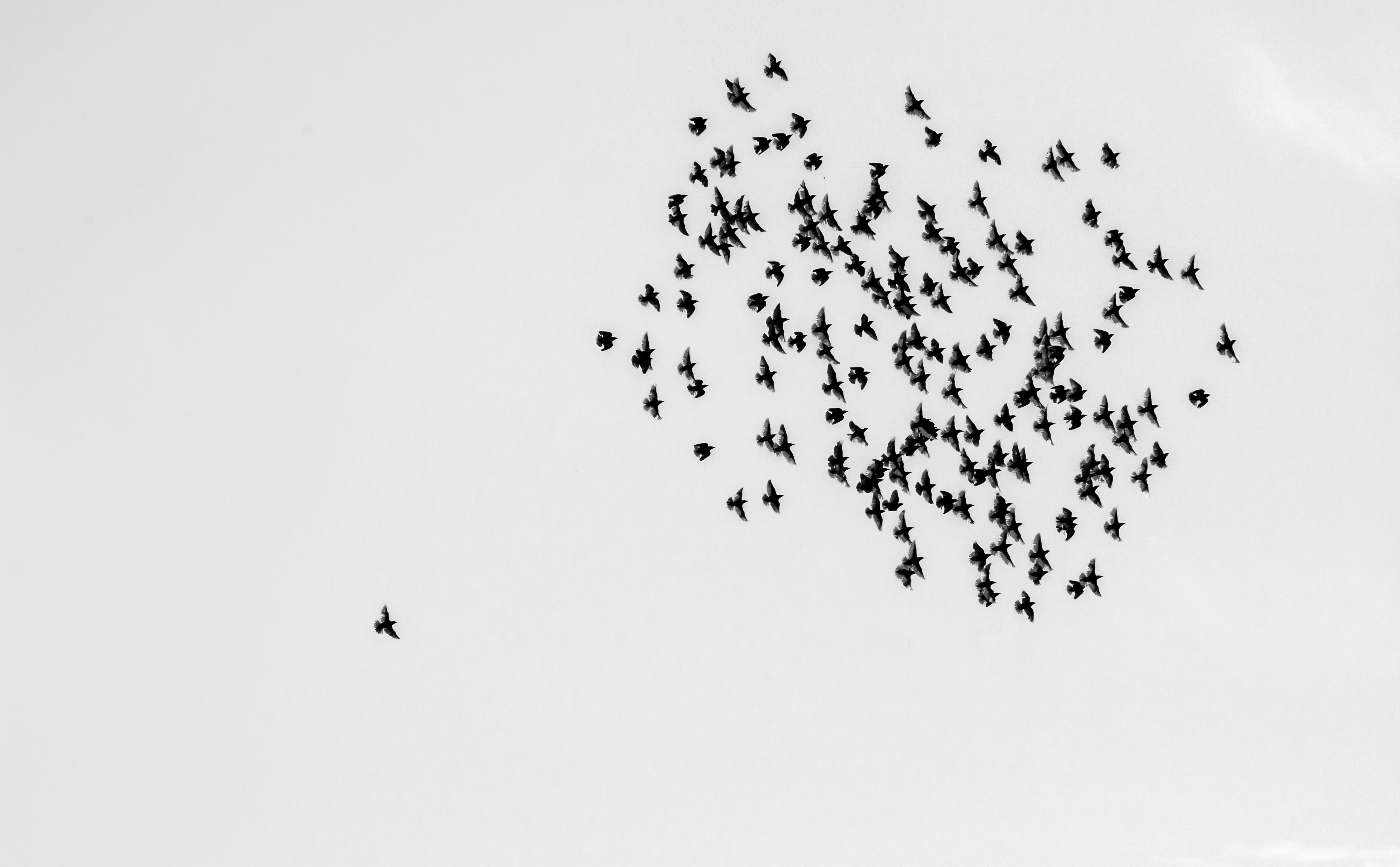 Sky alone alone among many
