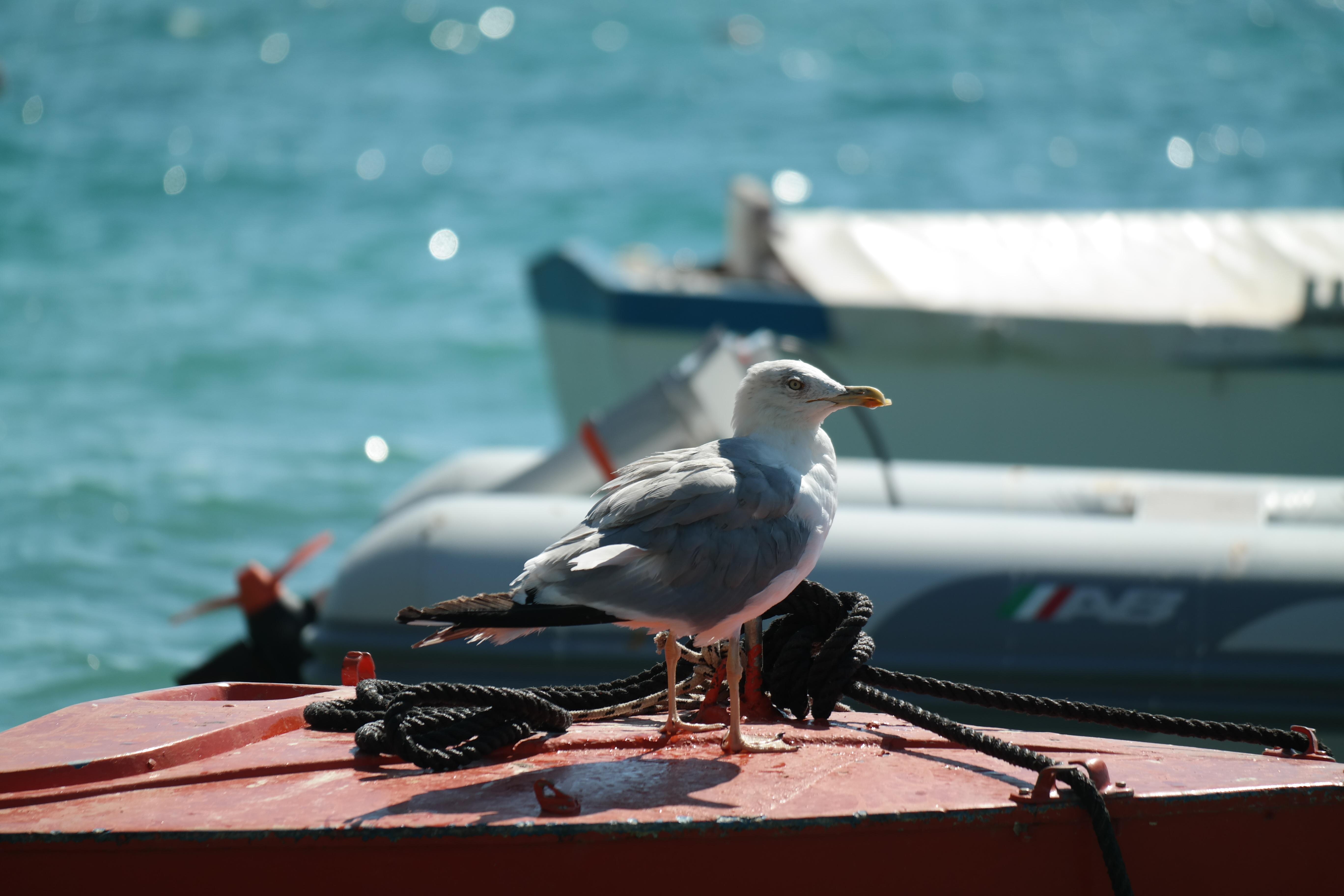 Port croatia mediterranean