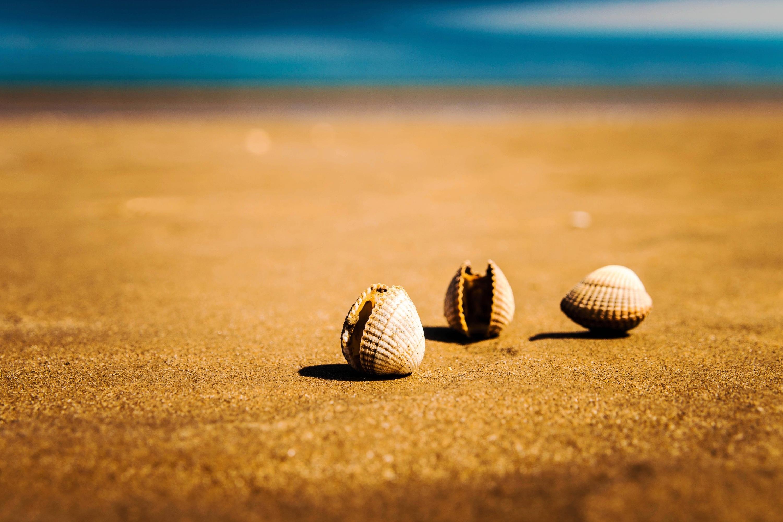 Sea vacation holiday