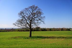 Ecology field grass
