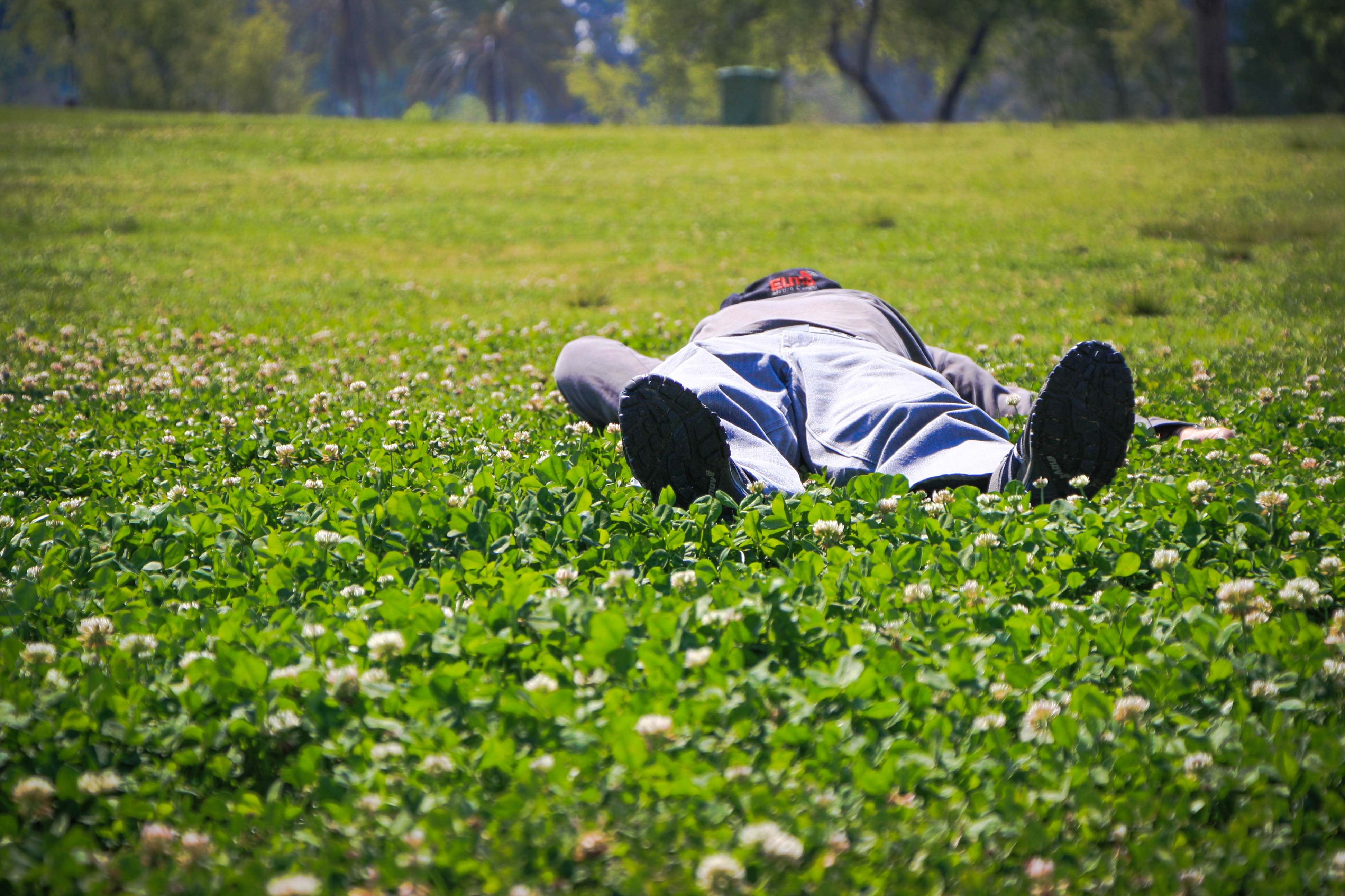 Holiday vacation grass